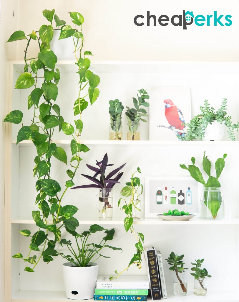Greeny Indoors for Eco Friendly Atmosphere