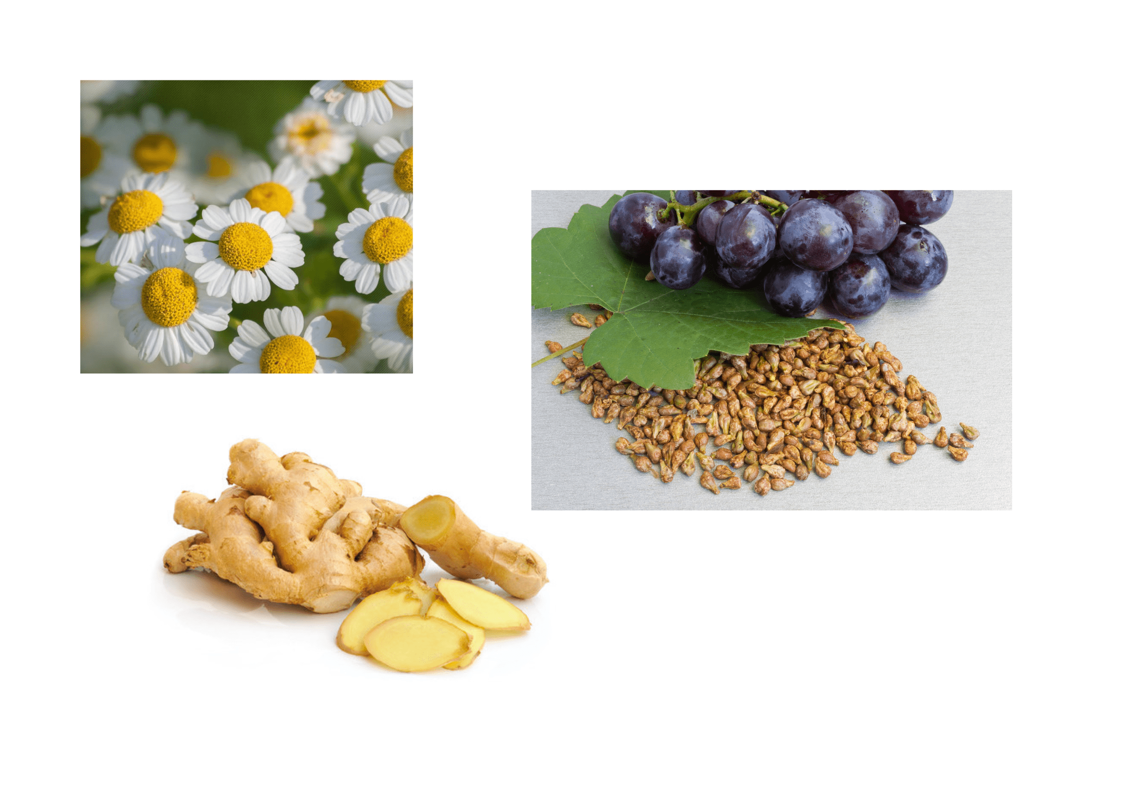 Ginger, Grape Seed Extract, Feverfew, Methionine, and l-cysteine